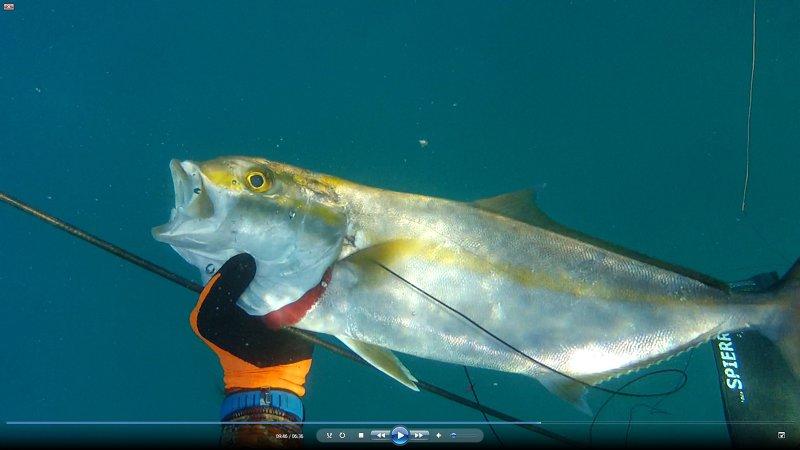 אינטיאס יפה - דייג בצלילה חופשית