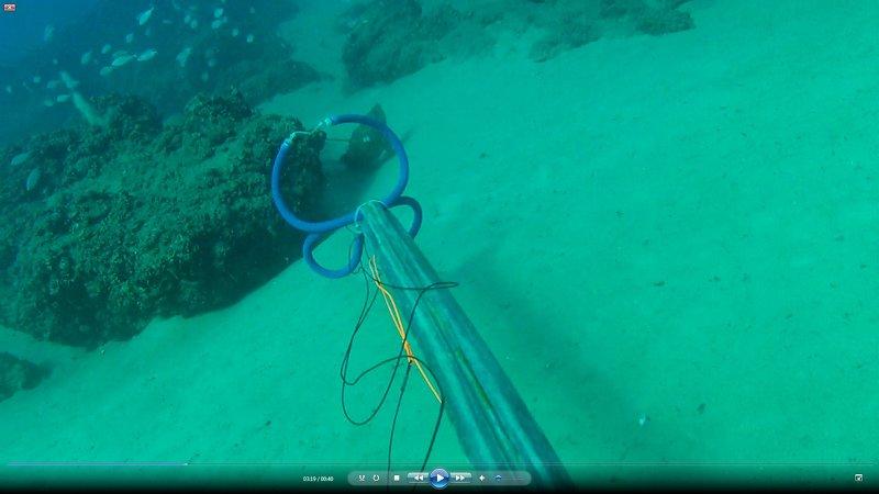 """דייג בצלילה חופשית בהתגנבות - לוקוס אירדי 2.5 ק""""ג"""