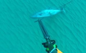 דייג בצלילה חופשית של פלמוד ענק - ירייה שנייה