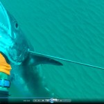 דייג בצלילה חופשית של פלמוד ענק - אורי בינסטד
