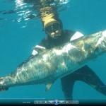אורי בינסטד והפלמוד - דייג בצלילה חופשית