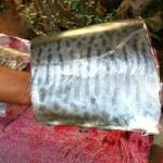 הנתח של הפלמידה שיועד לסביצ'ה