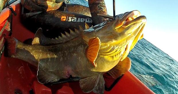 לוקוס אדום במשקל 6.3 קילו בדייג בצלילה חופשית אורי בינסטד - uri binsted spearfishing 6.3 kg dusky grouper
