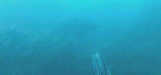 דייג בצלילה חופשית של לוקוס אדום דאור  במשקל 8 קילו - רגע הירייה בלוקוס